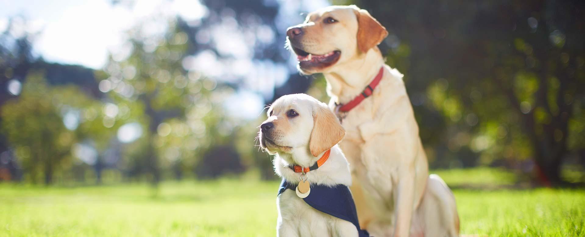 Blindenhunde